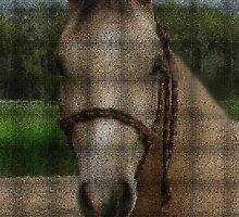"⊱✿ ✿⊰⊹الحصان العربي ""Hero"" Arabian Horse الحصان العربي⊱✿ ✿⊰⊹  by ✿✿ Bonita ✿✿ ђєℓℓσ"