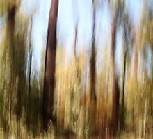 Forest Abstract by Elaine Teague