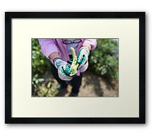 Fresh beans straight from the vegetable garden Framed Print