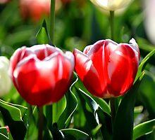 Happy tulip sistas by ShonaI