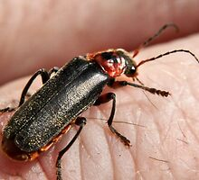 Small soldier beetle by missmoneypenny