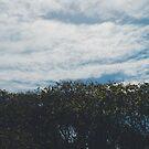 Sky x Tree by tropicalsamuelv