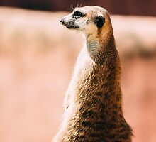 The Lonely Meerkat by PatiDesigns