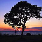 The Lonesome Tree by Barbny