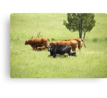 Cowgirls Canvas Print