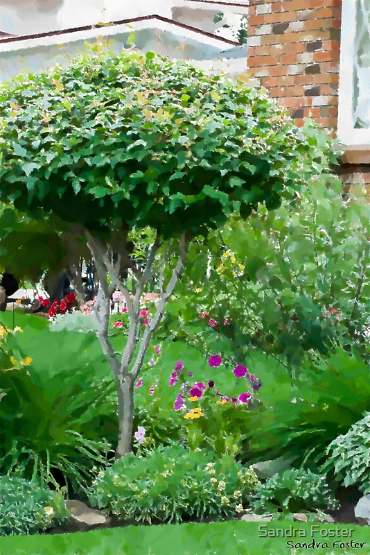 Topiary Tree by Sandra Foster