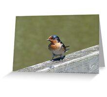 Welcome Swallow  : Hirundo neoxena Greeting Card