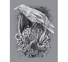 White Raven Photographic Print
