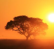 Camel Thorn Tree - African Sunset Tranquility  by LivingWild