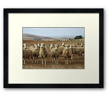 What are ewe's looking at? Framed Print