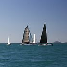 Whitsunday Sailing Club. by Andy Newman