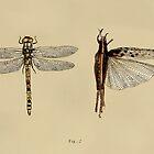 Entomology studies fig. 2 by djrbennett