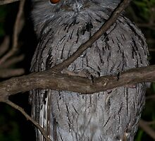 Tawny Frog Mouth  by Angie66