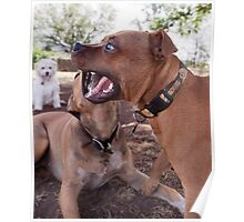 Dogs with game face on .24 Poster