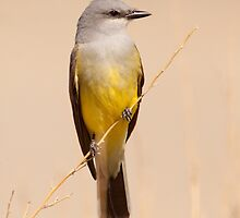 Yellow and Gray by Kent Keller
