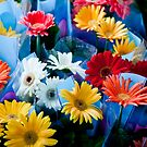Rainbow Daisies by phil decocco
