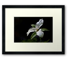 Trillium in partial shade Framed Print