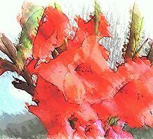 Gladiolus by OlaG