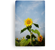 A Sunflower Up In The Sky Canvas Print