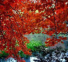 Autumn Shade by Michael J Armijo