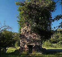 08 Carr House Ruins Tree Fireplace by ptosis