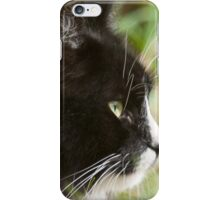 The Cat Beyonce  iPhone Case/Skin