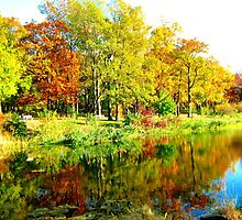 Autumn reflections by Alberto  DeJesus