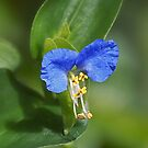 Blue Mouse Ears by Sharon Woerner