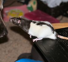 Mom...You're sposed to use a mouse on the laptop. This is a rat! by Keala
