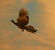 Speckled chachalaka at sunset by Ishaan Raghunandan