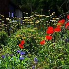 Garden in Cowhican BC by AnnDixon