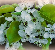 Blossom Time. by Bette Devine