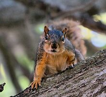 I smell Peanuts in your pocket! by Keala