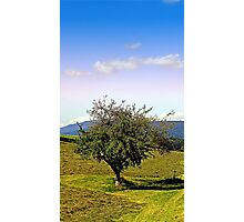 Fresh grass and old apple tree   landscape photography Photographic Print