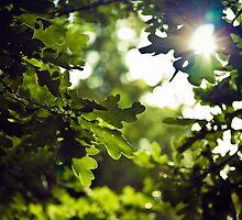 Forest oak by lightwanderer