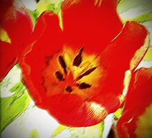 RED TULIPS by OlaG
