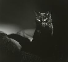 Film noir portrait of black cat Hasselblad square medium format film analogue photograph handmade darkroom print by edwardolive
