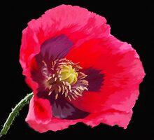 Red Poppy on Black by OlaG