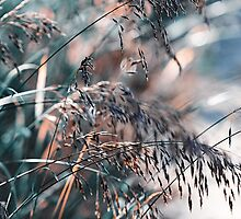 Silver Grass After Rain. Nature in Alien Skin by JennyRainbow