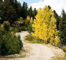 Colorado Autumn Road by pjphoto181