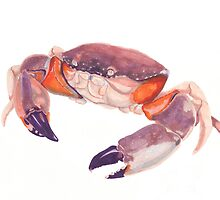Florida Stone Crab by Deanna Derosia