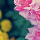 Three-coloured  by LenkaOBS