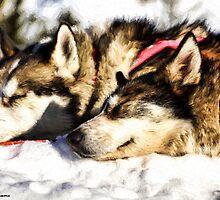 DOGS by joan manel zamora