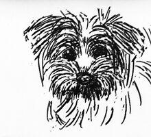 A puppy head  by OlaG