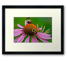 Busy Bumble Bees Framed Print