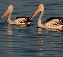 Pelicans at Sunset by Werner Padarin
