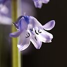 Bright and Happy as a Bluebell by Joy Watson