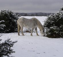 New Forest Pony in the snow by JeremyAnson