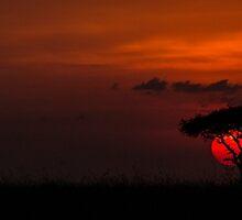 MASAI MARA SUNSET by marieleephoto