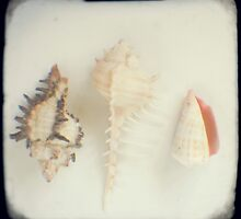 Shell trio by gailgriggs